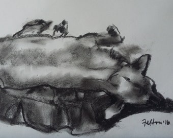 Charcoal life drawing of my dog - Dexi dude on the bed