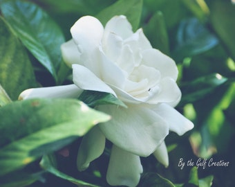 Gardenia, Flower, Nature Photography, Fine Art Photography, 8x10, Matted, Glossy, Floral Photography