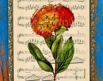 Scarlet Jungle-flame (Ixora) Botanical Print on an Unframed Upcycled Bookpage