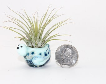 Lampwork Glass Bird Air Plant Holder . Air Plant Container . by Lori Davidson