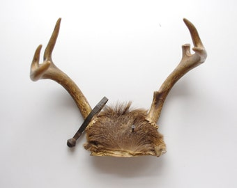 Vintage Antlers - Whitetail Deer - 6 Point Set - Wall Decor