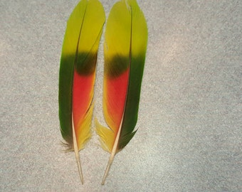 "Matched Pair Amazon Parrot 5"" Tail Feathers AM4"
