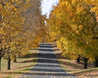 Lovely fall tree lined drive