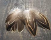 Female Mallard Duck Feathers ~ Cruelty Free