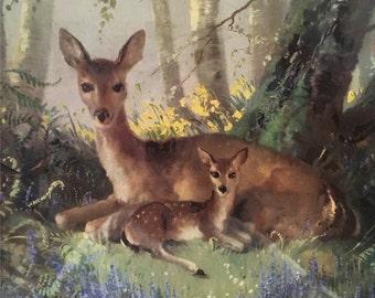 Vernon Ward Deer Print Kitsch Woodland Portrait