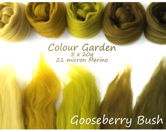 Olive Merino Shade sets - 21 micron Merino wool - 100g - 3.5oz - 5 x 20g - Colour Garden - GOOSEBERRY BUSH