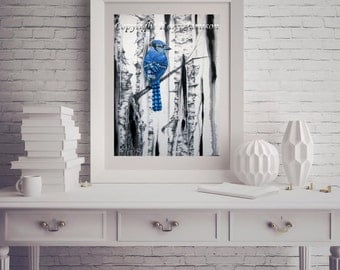 Karri Jamison Paper PRINT, Title: Blue Jay and Birch Trees, Giclee Print on Paper 12x16 inches