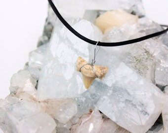 Leather and shark tooth choker