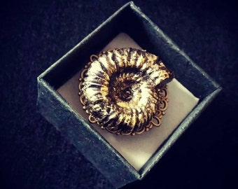 Resin Cast Ammonite Ring