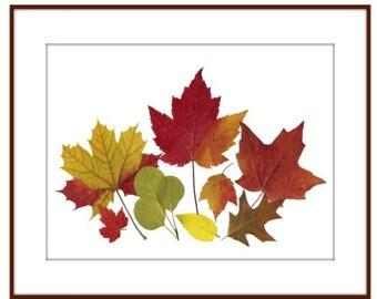 Autumn Leaves- pressed flowers - 8 x 10 print  #021