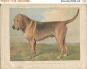 SALE Vero Shaw - Antique Dog Print -Bloodhound - Original Chromolithograph  - 1881 Book Of The Dog