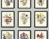 Antiqie Botanical Print SET of 9 Art Loudon Antique Beautiful Wildflower Flowers Yellow Purple Green Summer Plant Nature Home Wall Decor
