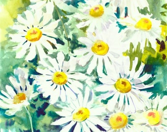 Artwork Chamomiles, 12 X 9 in, Daisy, white flowers, herbs, original watercolor painting