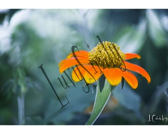 Orange Flower Photograph