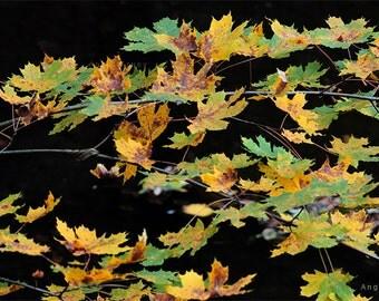 Instant download picture,Digital Wallpaper photo,Printable photo,Art Photography,Autumn season,Autumn leafs,Nature photo,Leaf,FineArt foto