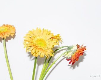 Flowers,Bucket of flowers,Colours,Yellow,Red,Orange,Still life photo,Fine Art Photography,Photo print,Foto art,Art Picture,white background