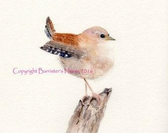 JENNY WREN, Little Bird, fine art, Giclee Watercolour Painting Print A4. Archival quality inks