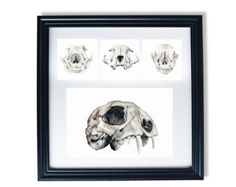 Study of skulls (Framed Giclée Print)