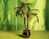 "Kit: Pygmy Palm approx 3"" tall"