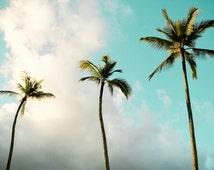 "Palm Trees, Hawaii Art, Fine Art Print, Hawaiian Photography, Surf Decor, Golden, Blue, Sky, Oahu, Spa Wall Decor - ""Three Palms"""