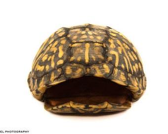 Box Turtle Shell Portrait - PRINT