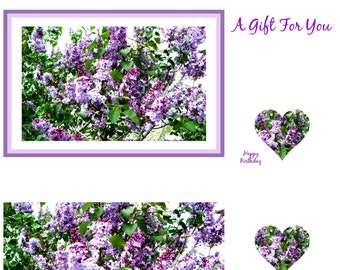 GREETING CARDS GIFT Set: 20-pieces created for you by Pam Ponsart of Pam's Fab Photos featuring Purple Lilacs and optional gift card