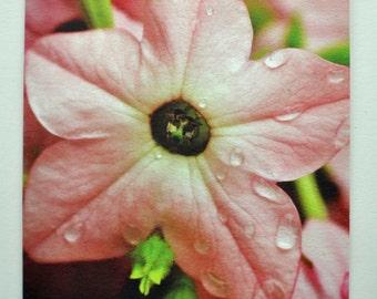 Starflower Photo Hemp Card