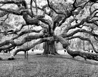 Charleston SC Photography - Angel Oak Photo - Nature Tree Wall Art Decor - South Carolina Black and White Print -