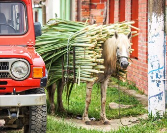 Colombia Photography - Sugarcane Print - Mogotes - Sugarcane Industry - Travel Photography