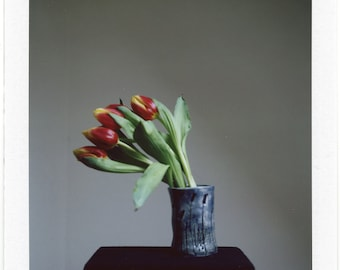 Red Tulips, Polaroid Photography, 8,5 x 10,5 cm, #687