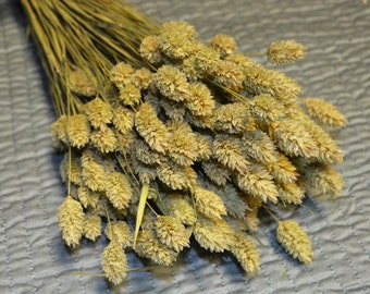 Dried Phalaris, Phalaris, Sage green wheat, Grains, Wheat