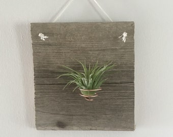 Air Plant Wall Hanger (cork screw)