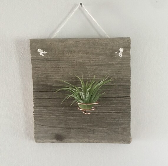 air plant wall hanger cork screw