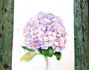 Watercolor painting - Pink hydrangea flower