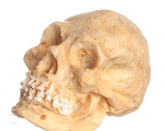 DOLLHOUSE MINIATURE SKULL #A4443