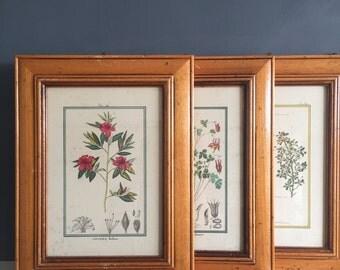 Set of 4 Vintage Framed Botanical Prints
