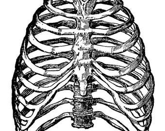 Vintage skeleton - Temporary tattoo