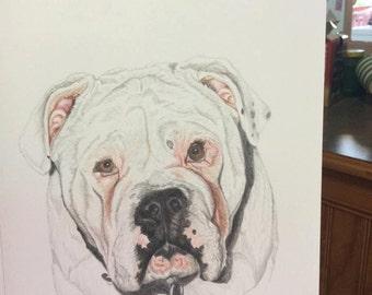Bulldog blank card