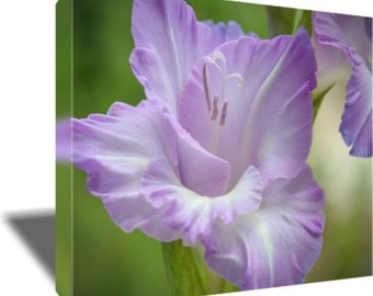 Flower Photography, Canvas Wrap, Print,  Lavender, Purple, Wall Art, Home Decor, Nature, Bedroom, Office, Gladiolus,