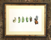 "Monarch Butterfly Art Print, Butterfly Illustration Archival Print Large Size 11.7"" x 16.5"""