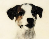Joe - 10 x 18 cm (4x7) original dog art portrait