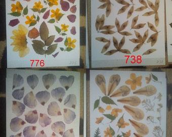 Pressed flowers / oshibana assortment - real flowers leisure arts. Pressed leaves, pressed foliage.  #776 #738 #732 #864