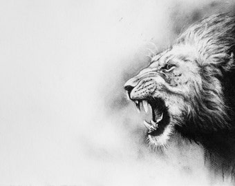 Lion, charcoal drawing, giclee print