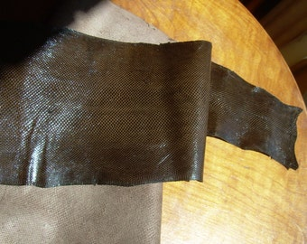 Natural dark brown shiny snakeskin is 47 inches long, and 5.2 inches at widest. Great for belts, guitar straps, knife sheaths, handbags, etc
