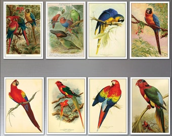Vintage Parrot Macaw Victorian Illustrations Fridge magnets set of 8