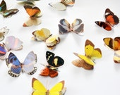 Butterfly embellishments decoration / scrapbooking / smash books / craft / card making / gift decoration