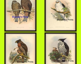 Set of four Bird prints from the 1800's Plates 65,66,67, and 68