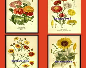 Set of four flower prints from 1800's Plates 117,118,119, and 120