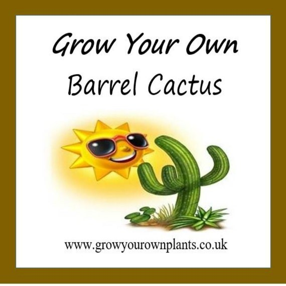 Grow Your Own Barrel Cactus Plant Kit From By