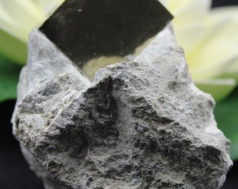 Large Pyrite Cube in Marl Matrix Mineral SpecimenPYT15
